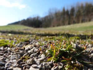 Developing Spring- Photo: Alex Melson/ Keele University
