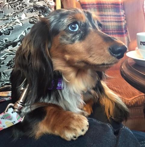 Belle the dog