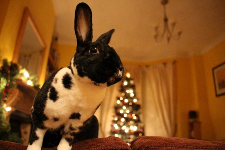 Scampy the rabbit